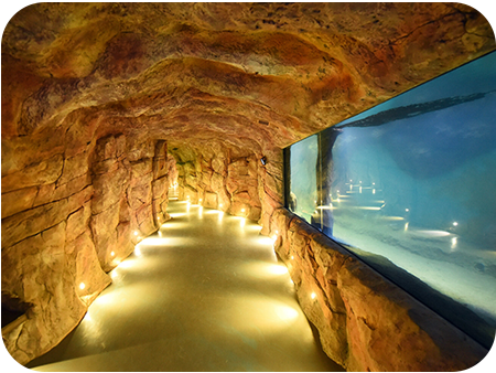 Крокус Сити Океанариум Экспозиция Моря и океаны